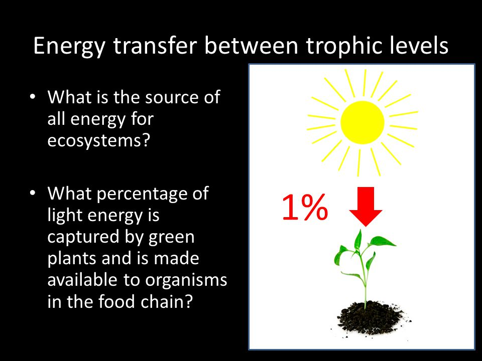 Energy losses in food chains Plants convert 1% - 3% of the Sun's energy into organic matter (carbohydrates, proteins, lipids etc).