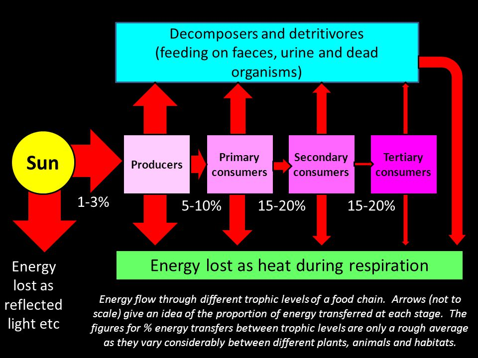Calculating the efficiency of energy transfers The energy available at each trophic level is usually measured in kilojoules per square metre per year (kJm -2 year -1 ).
