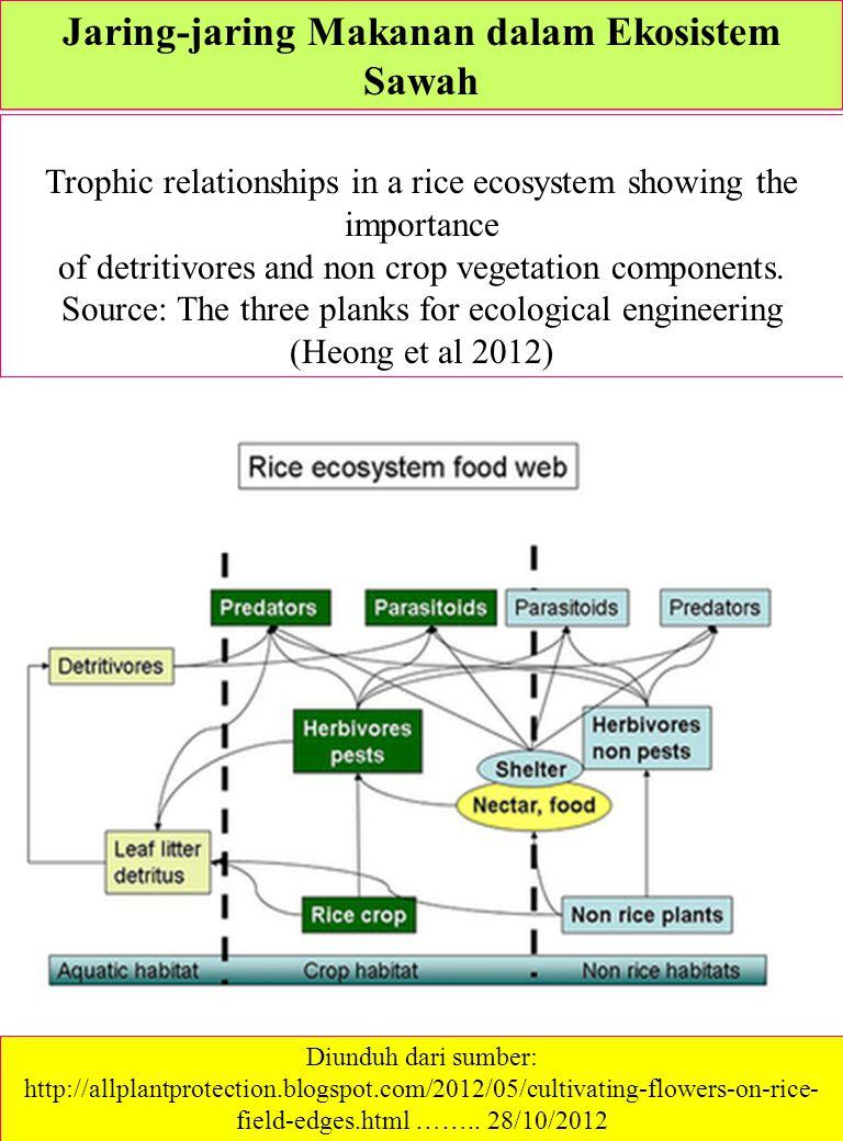 Jaring-jaring Makanan dalam Ekosistem Sawah Trophic relationships in a rice ecosystem showing the importance of detritivores and non crop vegetation c