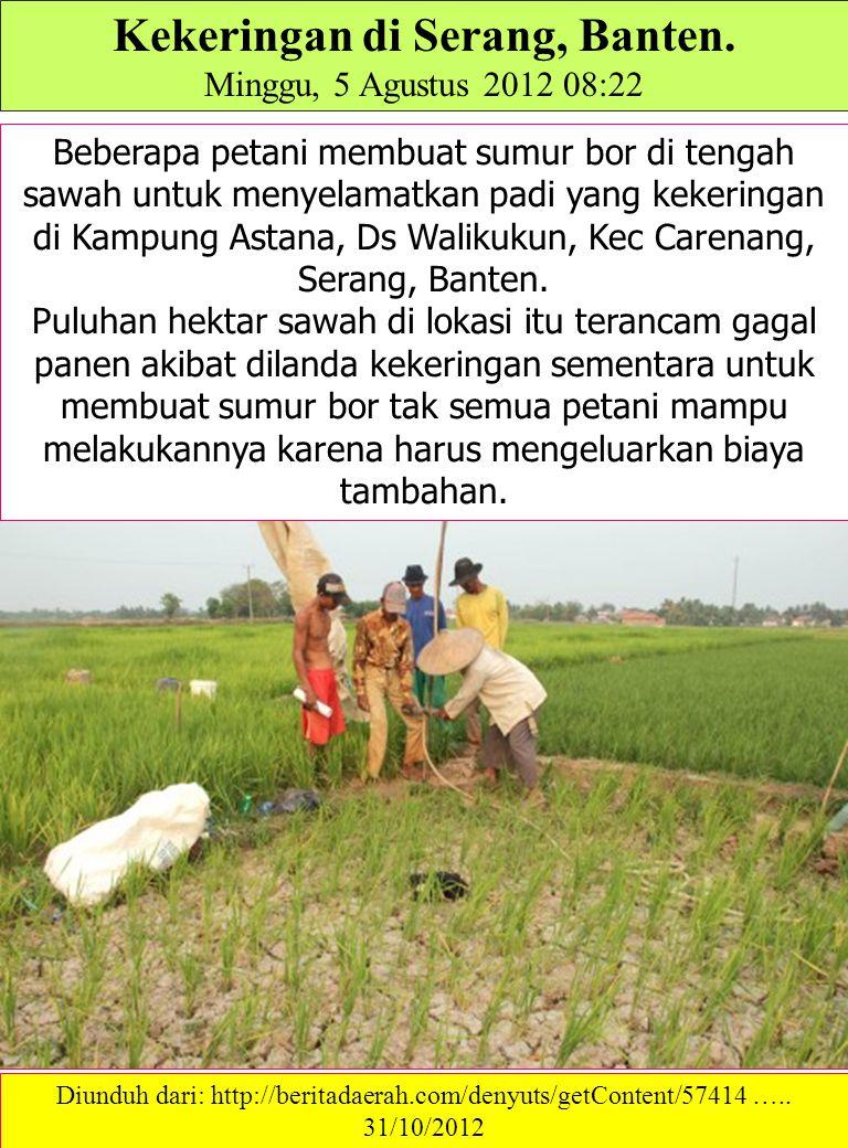Kekeringan di Serang, Banten. Minggu, 5 Agustus 2012 08:22 Beberapa petani membuat sumur bor di tengah sawah untuk menyelamatkan padi yang kekeringan