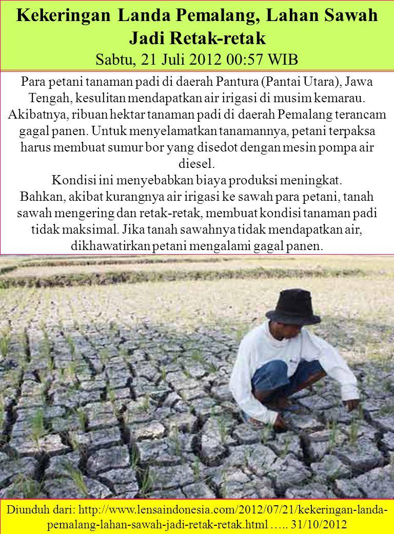 Dampak kekeringan pada tanaman padi muda Irigasi Kering, Puluhan Hektar Sawah Kekeringan (Post date: 05/07/2012 - 20:19 REPORTER: ab.