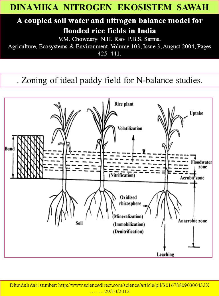 DINAMIKA NITROGEN EKOSISTEM SAWAH A coupled soil water and nitrogen balance model for flooded rice fields in India V.M. Chowdary, N.H. Rao, P.B.S. Sar