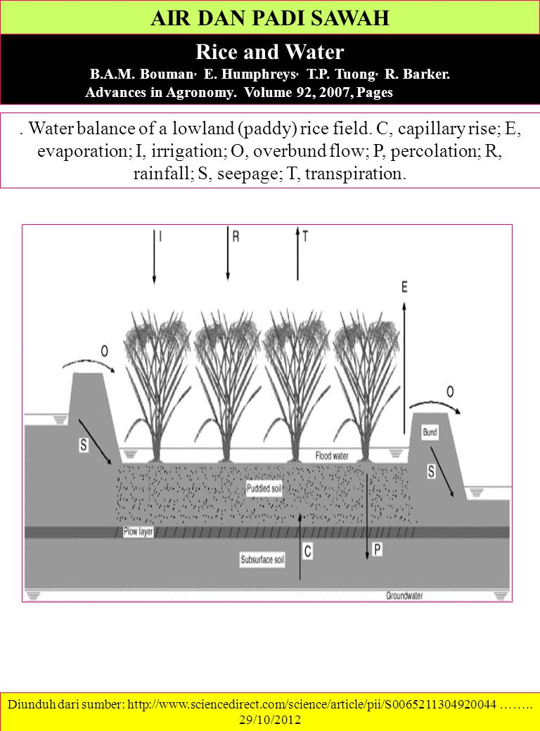 AIR DAN PADI SAWAH Rice and Water B.A.M. Bouman, E. Humphreys, T.P. Tuong, R. Barker. Advances in Agronomy. Volume 92, 2007, Pages 187–237. Diunduh da