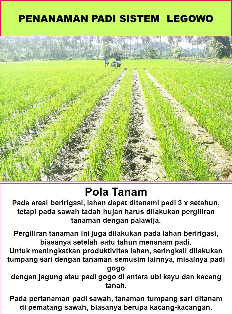 AIR DAN PADI SAWAH Rice and Water B.A.M.Bouman, E.