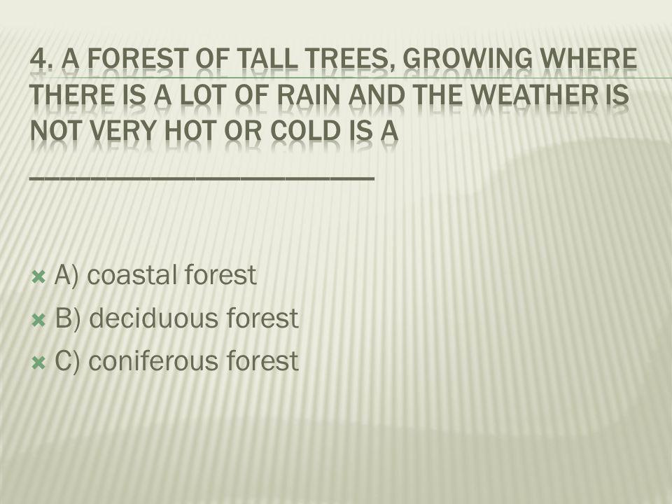  A) coniferous forest