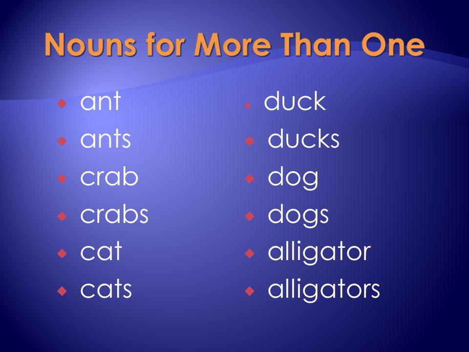  ant  ants  crab  crabs  cat  cats  duck  ducks  dog  dogs  alligator  alligators