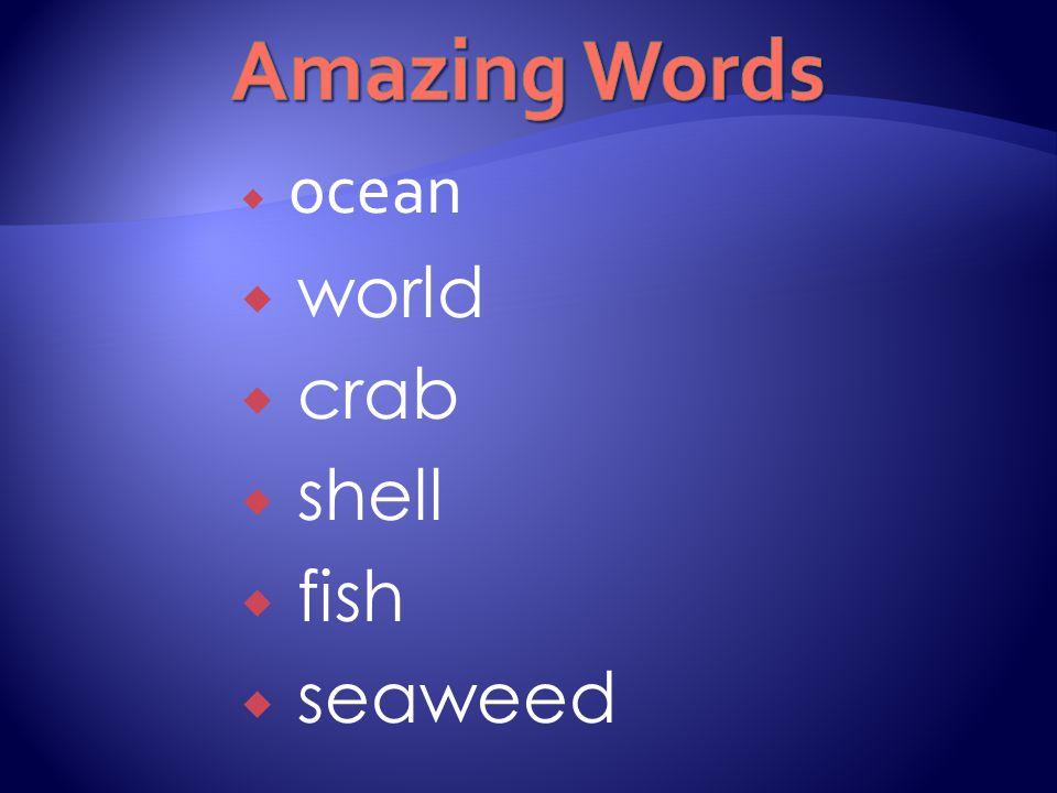  ocean  world  crab  shell  fish  seaweed