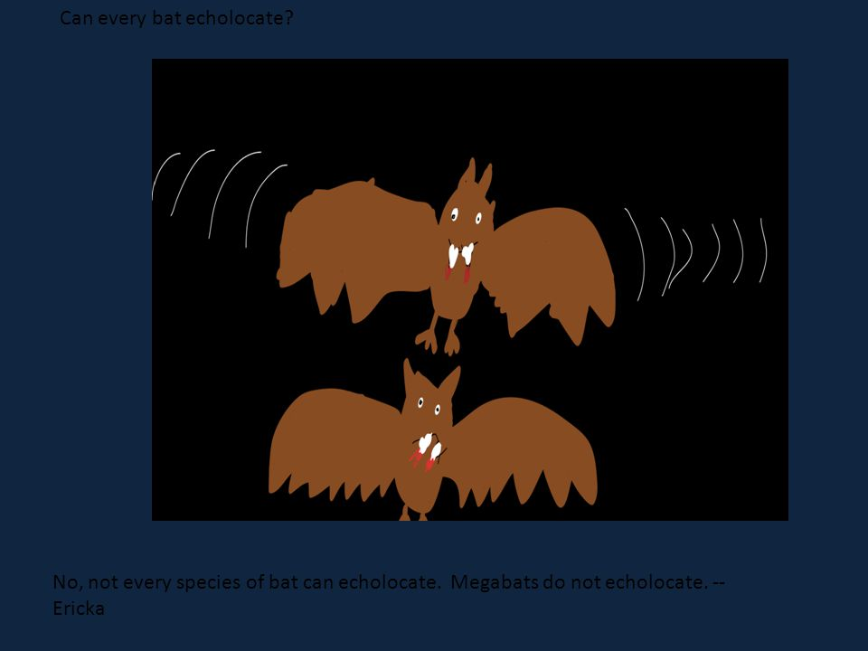 What Can every bat echolocate. No, not every species of bat can echolocate.