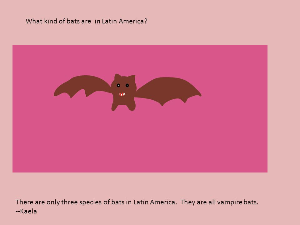 What kind of bats are in Latin America. There are only three species of bats in Latin America.