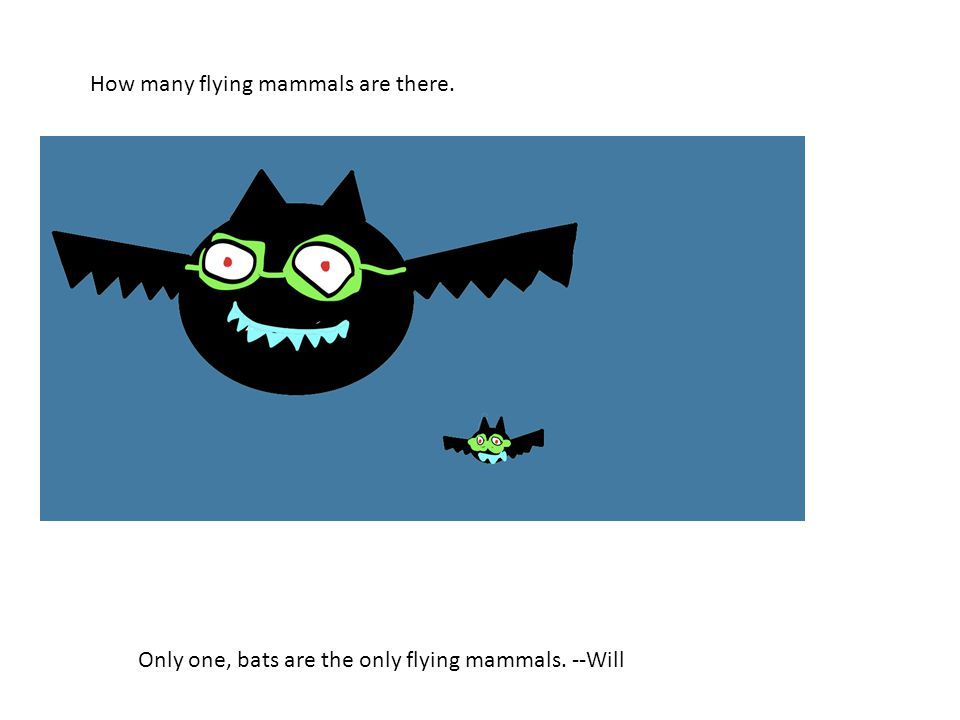 How many flying mammals are there. Only one, bats are the only flying mammals. --Will