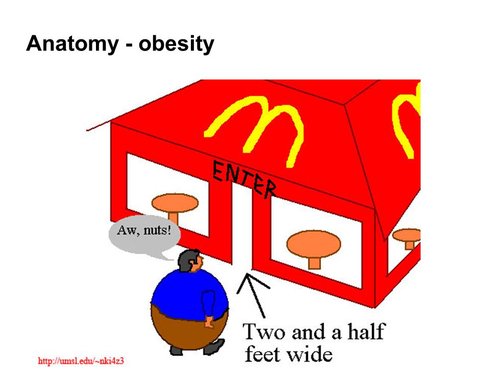Anatomy - obesity