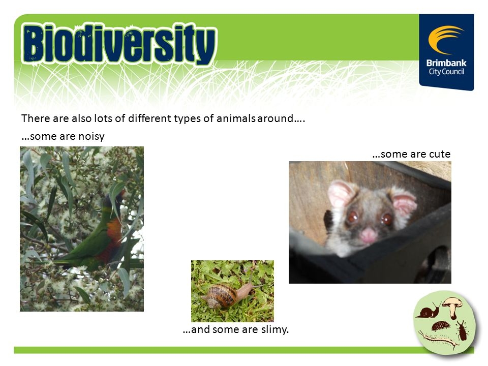 There are also lots of different types of animals around….