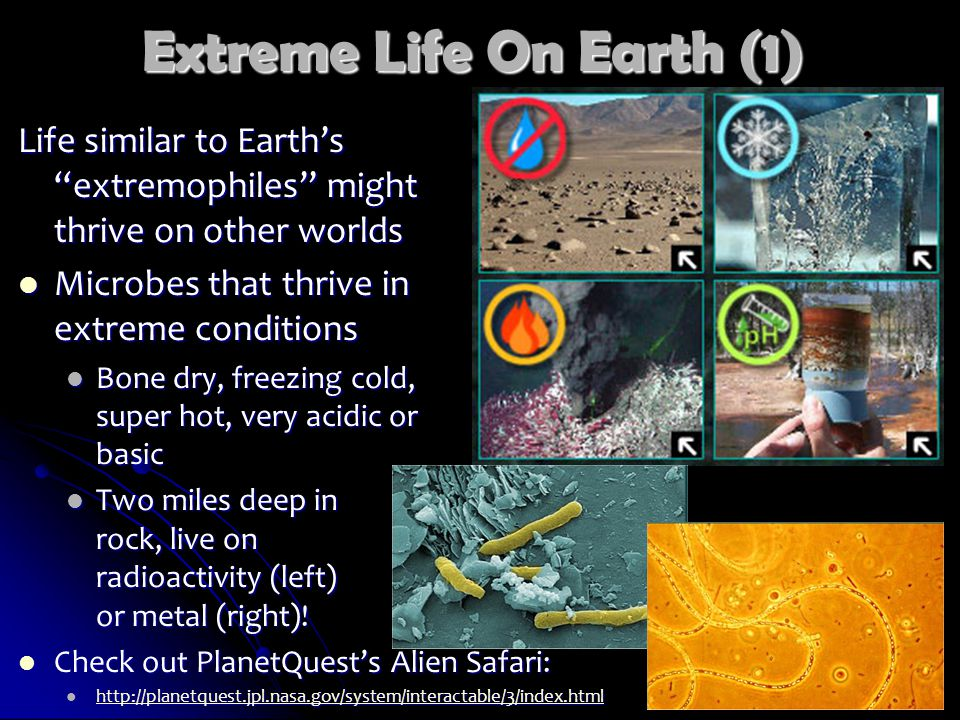 Extreme Life On Earth (1) Life similar to Earth's extremophiles might thrive on other worlds Microbes that thrive in extreme conditions Microbes that thrive in extreme conditions Bone dry, freezing cold, super hot, very acidic or basic Bone dry, freezing cold, super hot, very acidic or basic Two miles deep in rock, live on radioactivity (left) or metal (right).