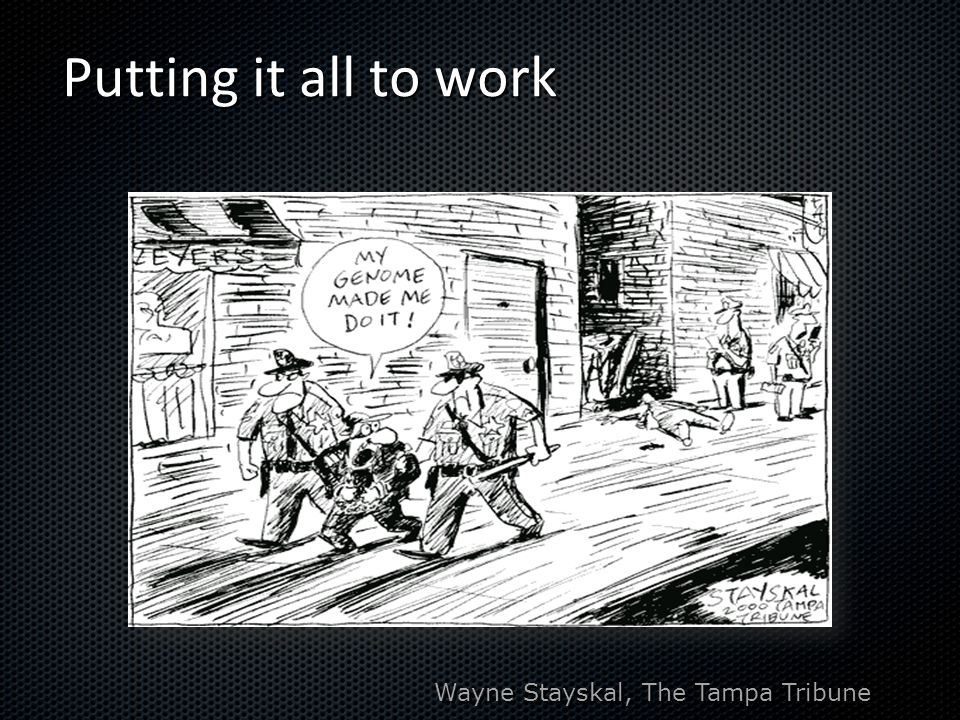 Putting it all to work Wayne Stayskal, The Tampa Tribune
