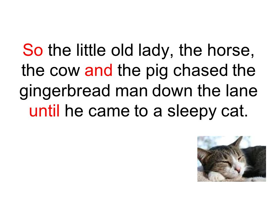 So the little old lady, the horse, the cow and the pig chased the gingerbread man down the lane until he came to a sleepy cat.