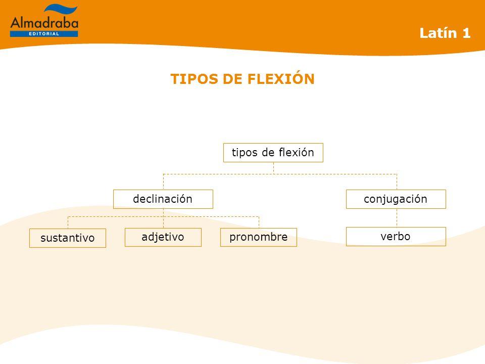 TIPOS DE FLEXIÓN tipos de flexión Latín 1 declinaciónconjugación verbo adjetivopronombre sustantivo