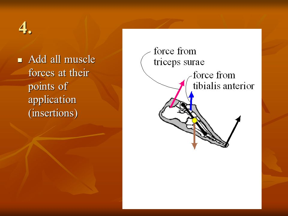 4. Add all muscle forces at their points of application (insertions) Add all muscle forces at their points of application (insertions)