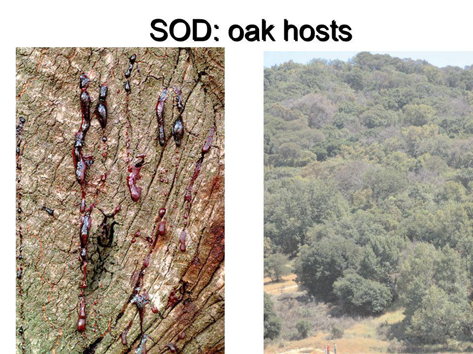 SOD: oak hosts