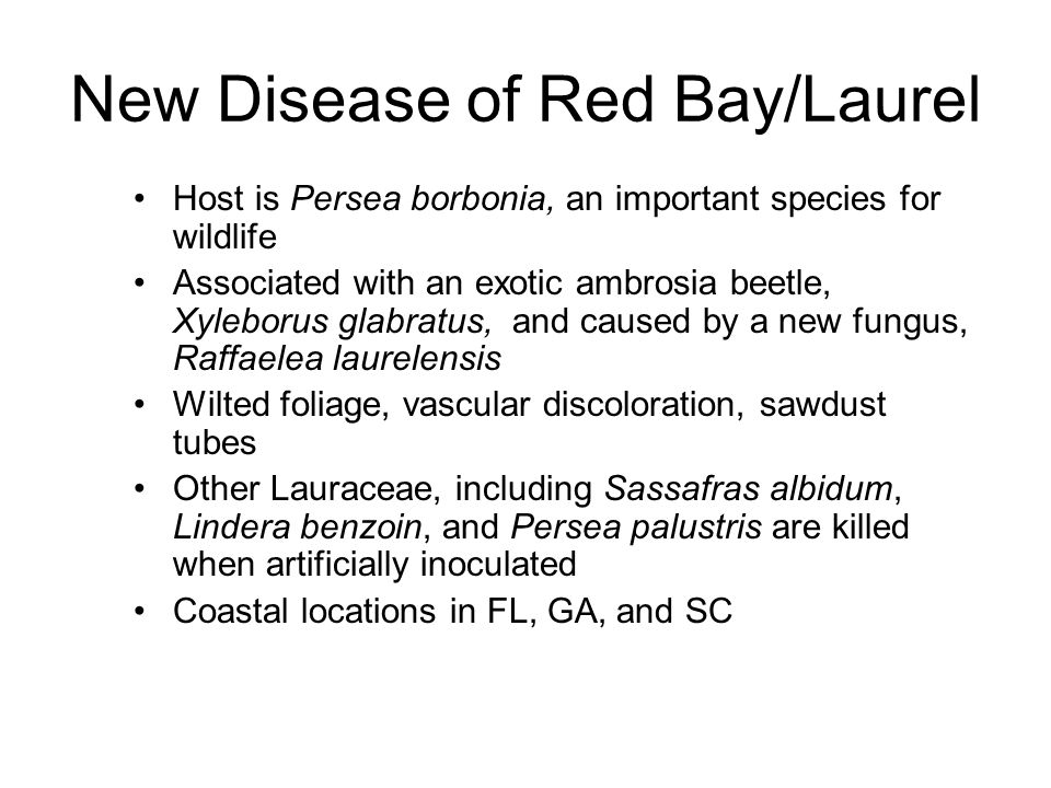 New Disease of Red Bay/Laurel Host is Persea borbonia, an important species for wildlife Associated with an exotic ambrosia beetle, Xyleborus glabratu