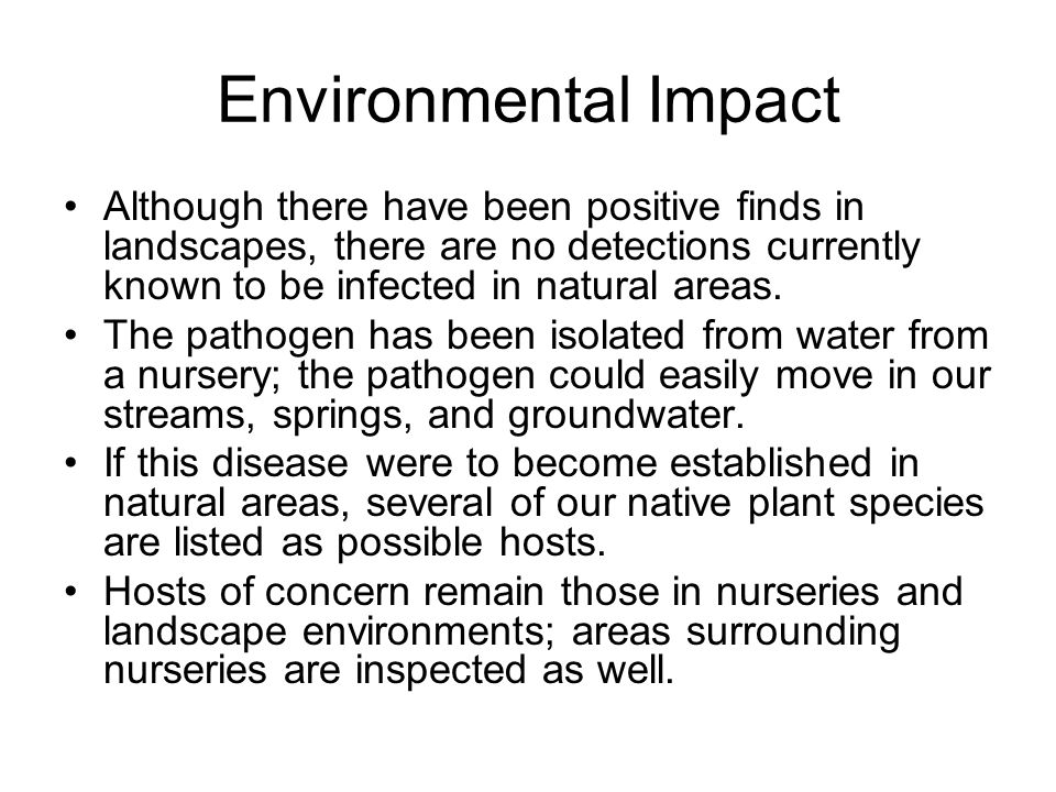 Distribution and Additional Info Attacks seemingly healthy trees; beetle may be attracted to stressed trees Leads to wilt and death Redbay and sassafras mortality in SC, GA and FL Mortality in Florida since detection increased from 10 to 60% in 9 months Several Laurel relatives susceptible, including pondspice, avocado, sassafrass, and pondberry/southern spicebush (federally endangered species) New name is Laurel Wilt Disease Similar to another devastating tree wilt disease: Dutch Elm Disease