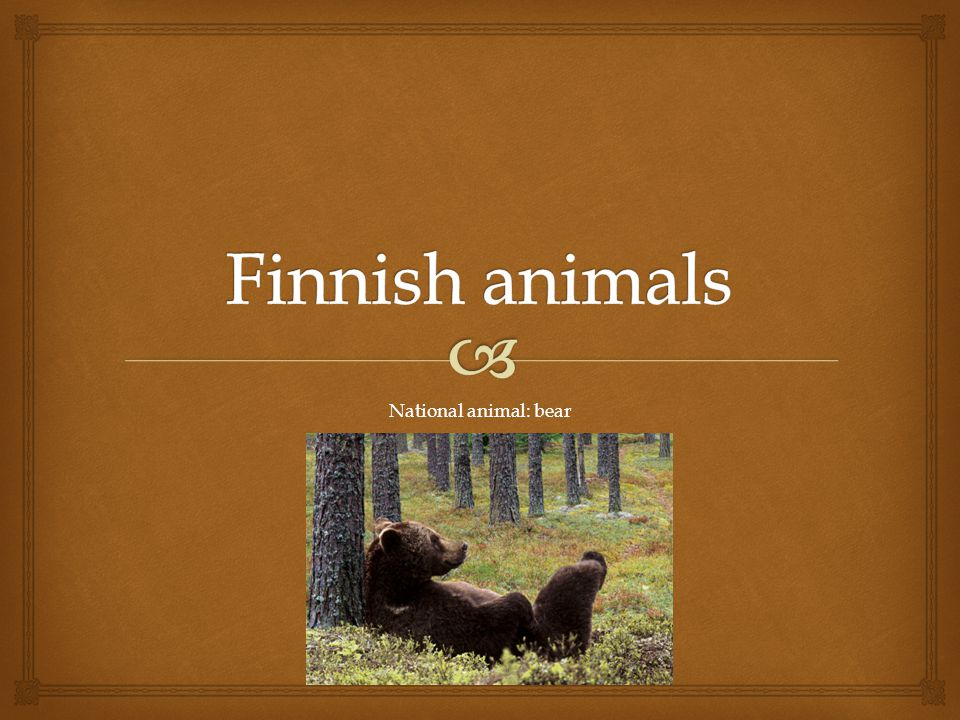   In Finland there are about 80 different mammals  Typical mammals in the Finnish nature: bear, wolf, reindeer, wolverine.