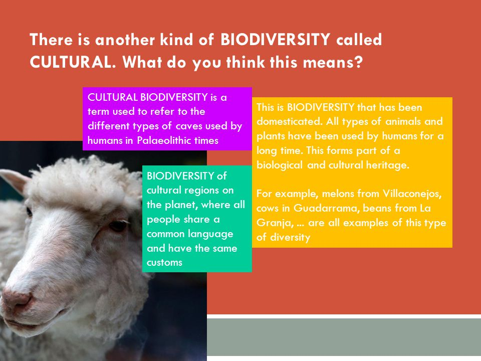 There is another kind of BIODIVERSITY called CULTURAL. What do you think this means? CULTURAL BIODIVERSITY is a term used to refer to the different ty