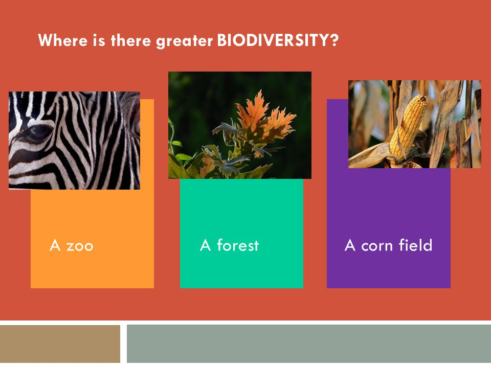 Where is there greater BIODIVERSITY? A corn fieldA forestA zoo