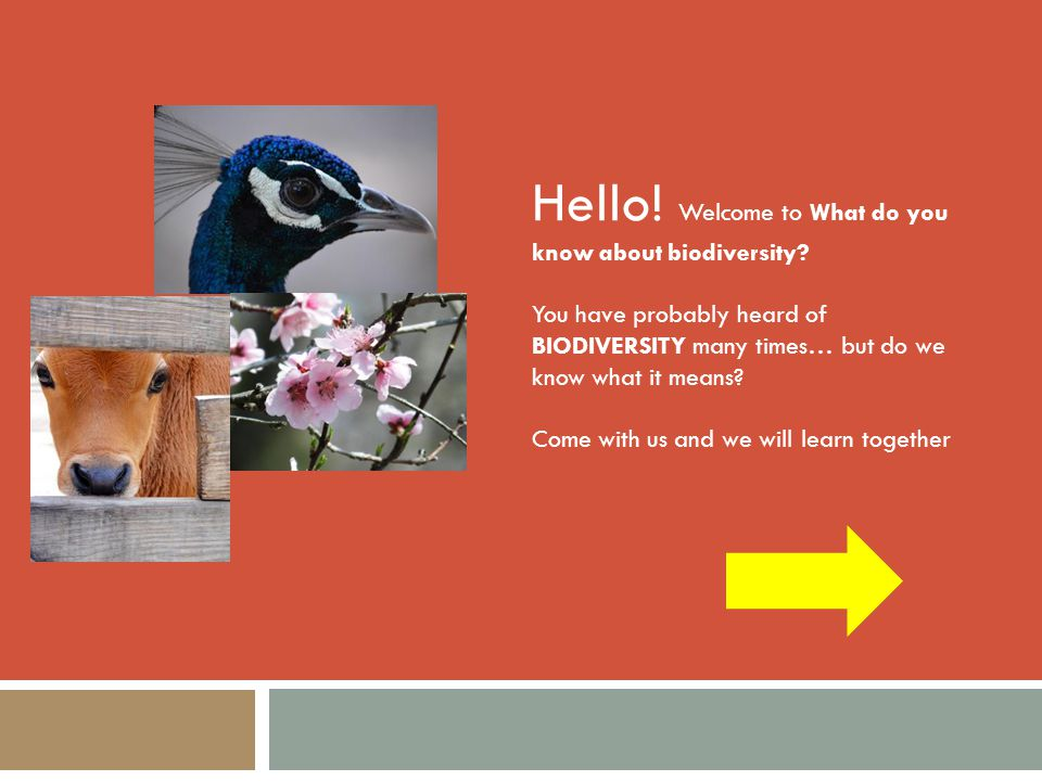Hello! Welcome to What do you know about biodiversity? You have probably heard of BIODIVERSITY many times… but do we know what it means? Come with us