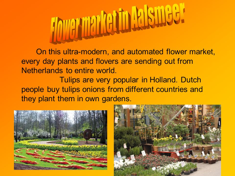 On this ultra-modern, and automated flower market, every day plants and flovers are sending out from Netherlands to entire world.