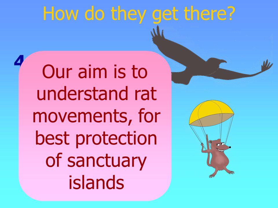 4. Conspiracy Our aim is to understand rat movements, for best protection of sanctuary islands