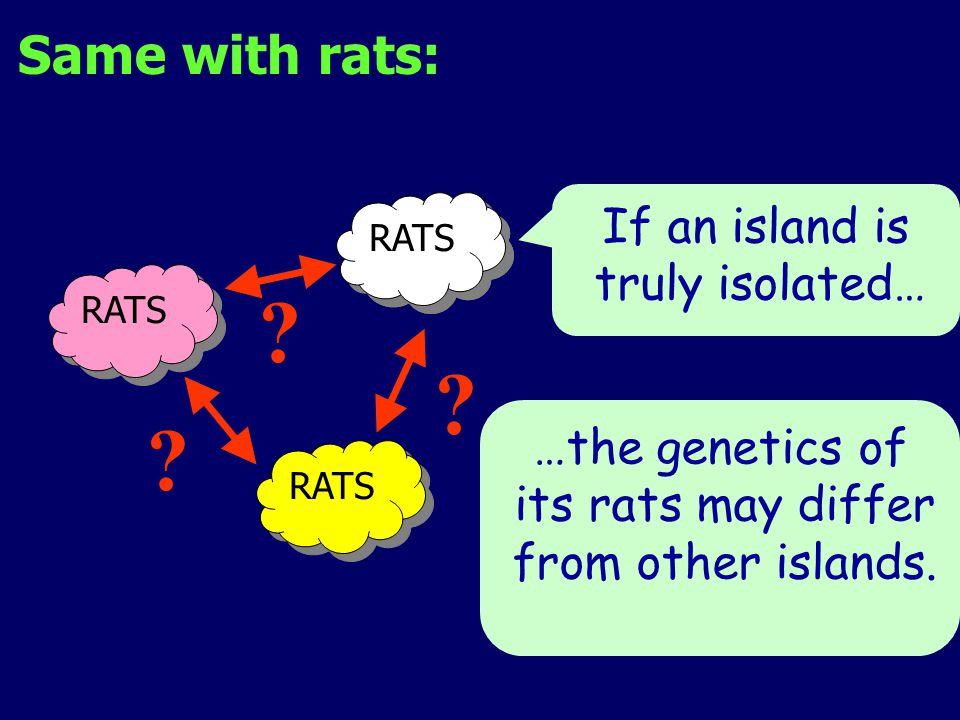 RATS .