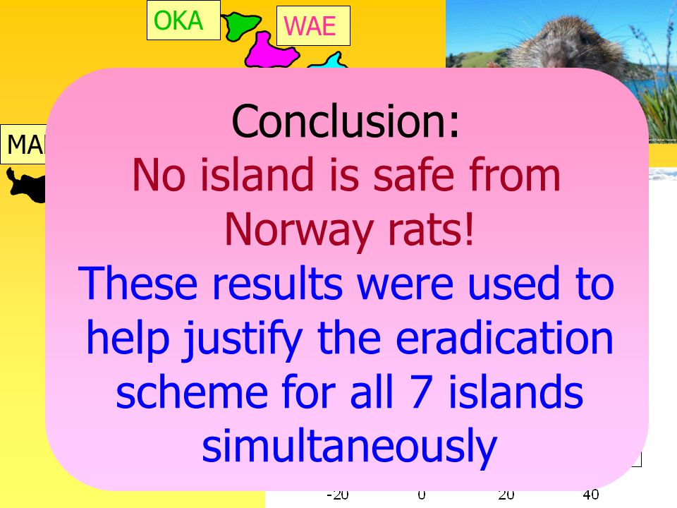 URU MAH Conclusion: No island is safe from Norway rats.