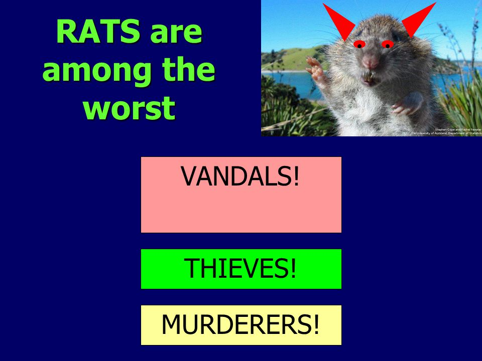RATS are among the worst COMPETITION PREDATION HABITAT DESTRUCTION VANDALS! THIEVES! MURDERERS!