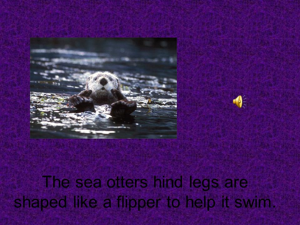 A sea otters front paws that look like brown mittens to help it swim.