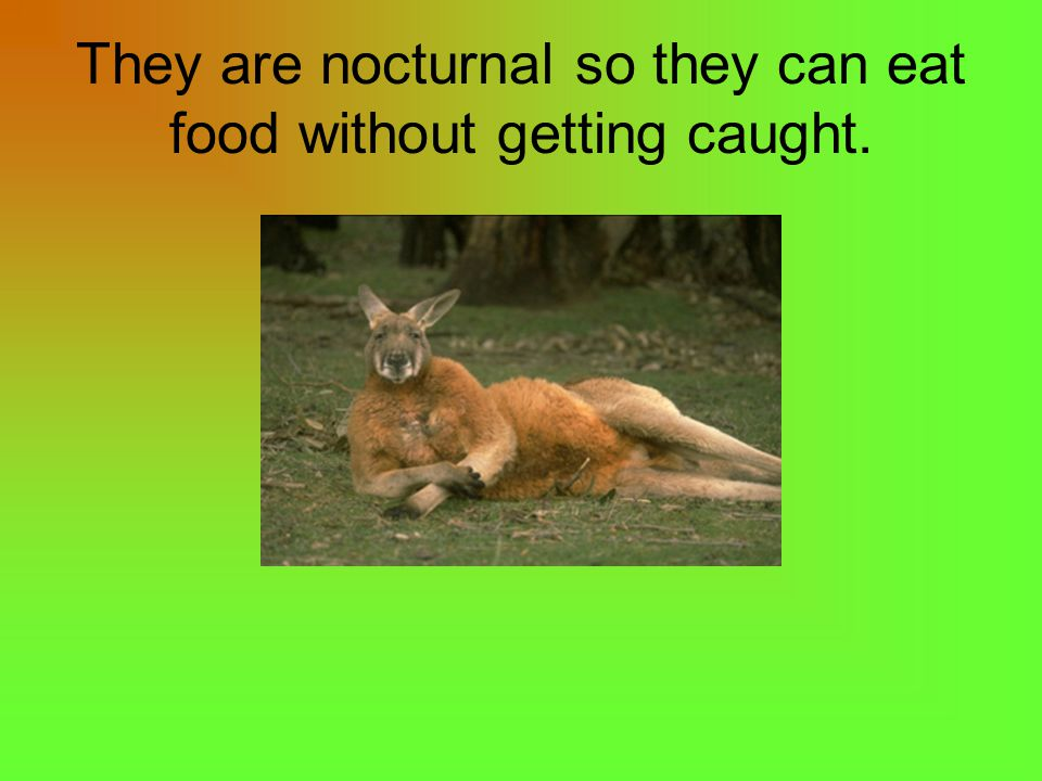 They are nocturnal so they can eat food without getting caught.