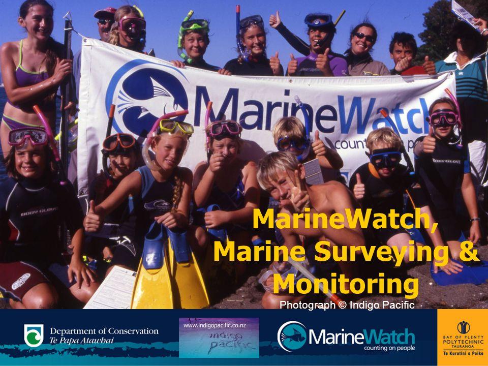 MarineWatch, Marine Surveying & Monitoring Photograph © Indigo Pacific