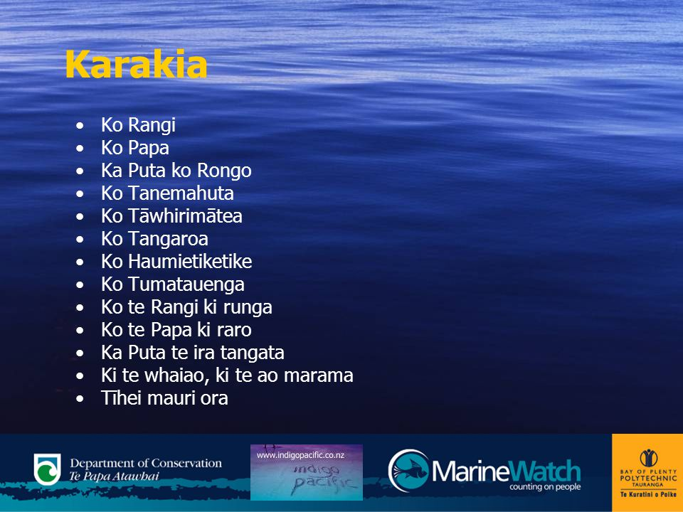 MarineWatch In Aotearoa we are surrounded by sea.