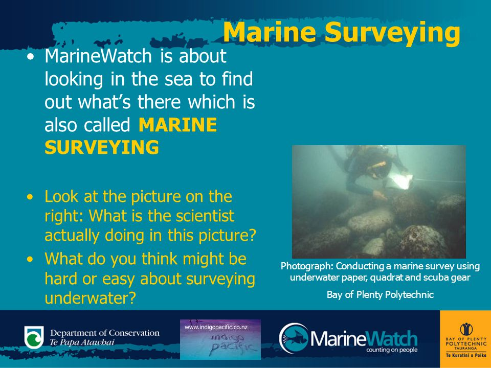 Marine Surveying When doing a marine survey we might look at: Species diversity – what animals and plants are living at a site, or Species abundance – how many animals and plants are living at a site, or Some marine surveys might measure the size of animals or plants as an indication of the health of an area or population.