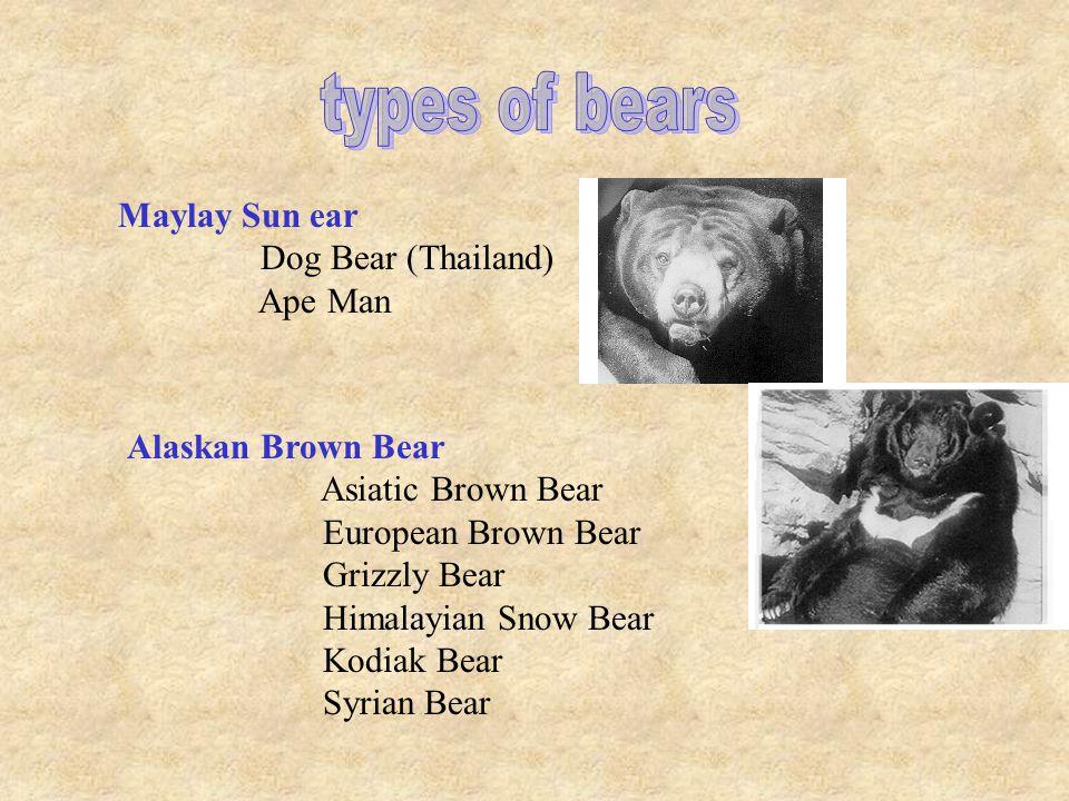 Sloth bear Aswail Baloo (Kipling) Honey bear Jungle joker Lip bear Spectacled Short-faced bear