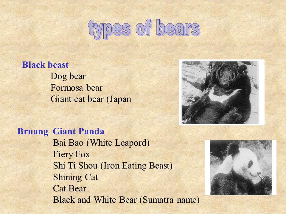 Maylay Sun ear Dog Bear (Thailand) Ape Man Alaskan Brown Bear Asiatic Brown Bear European Brown Bear Grizzly Bear Himalayian Snow Bear Kodiak Bear Syrian Bear
