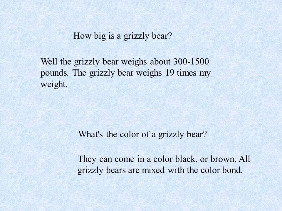 Grizzly bears have a hump on their shoulders.