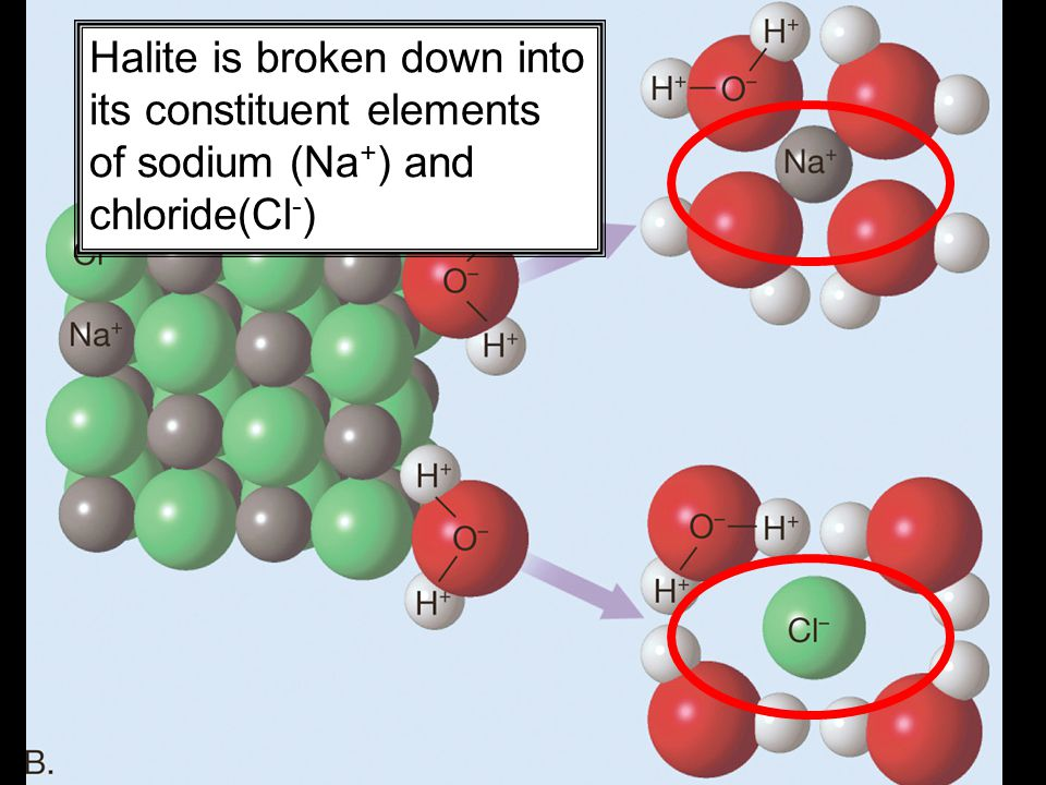 19 Halite is broken down into its constituent elements of sodium (Na + ) and chloride(Cl - )