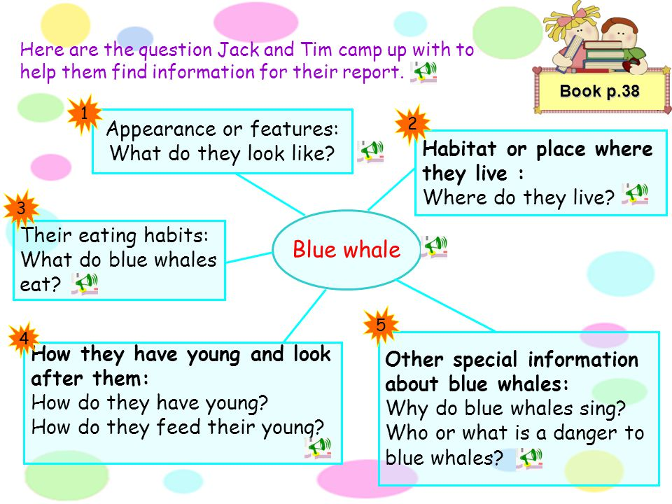 Book p.38 Let's write an information report on blue whales for our classmates! An information report provides facts and descriptions about a topic. He