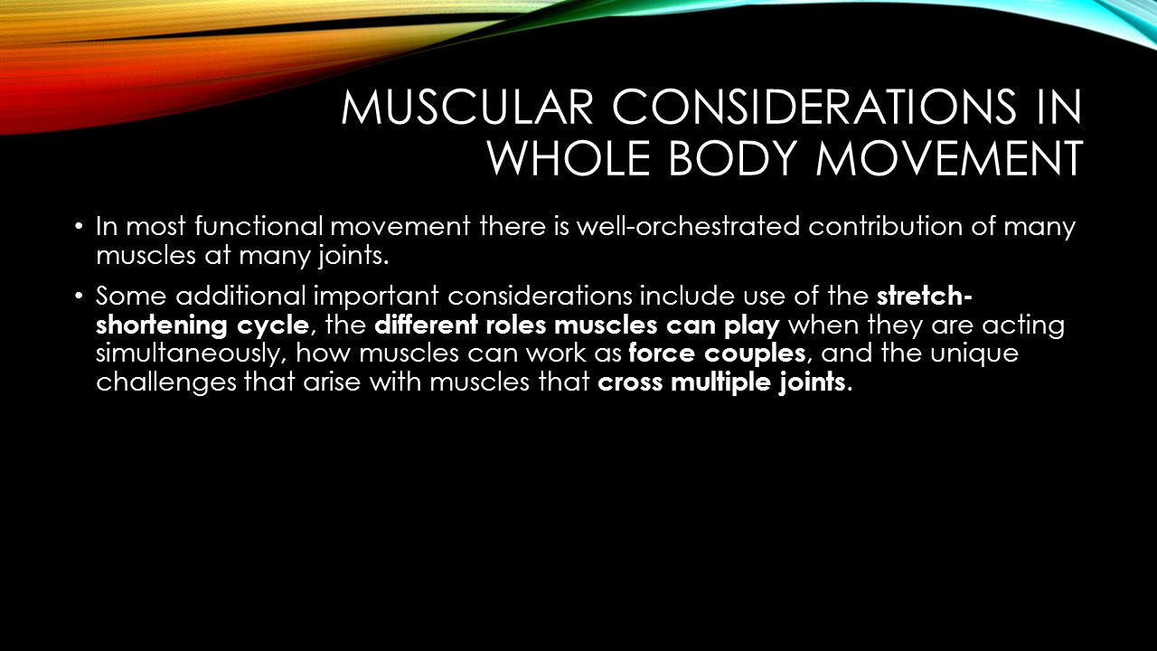 MUSCULAR CONSIDERATIONS IN WHOLE BODY MOVEMENT Stretch-Shortening Cycle A muscle is used eccentrically immediately preceding use of the same muscle concentrically When an active muscle is stretched, mechanical energy is stored in the elastic component of the muscle, which is then released during the immediately following shortening contraction, resulting in greater force.