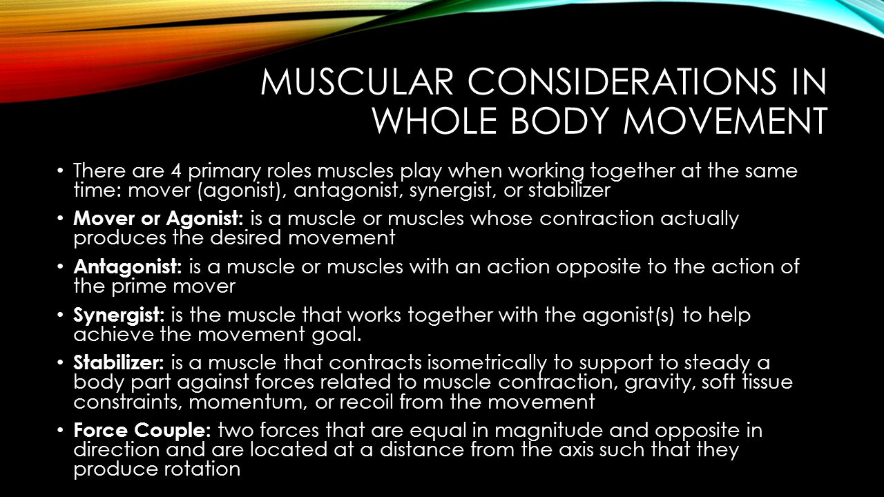 MUSCULAR CONSIDERATIONS IN WHOLE BODY MOVEMENT Special Considerations with Multijoint Muscles Muscles can cross one or more joints and dramatically influence the muscles contribution to movement Single-joint/Uniarticulate Muscle – crosses only 1 joint Can produce movement only at the joint it crosses Ex.