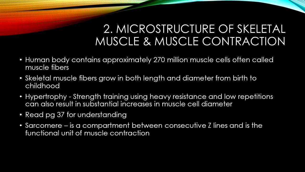 2. MICROSTRUCTURE OF SKELETAL MUSCLE & MUSCLE CONTRACTION Human body contains approximately 270 million muscle cells often called muscle fibers Skelet
