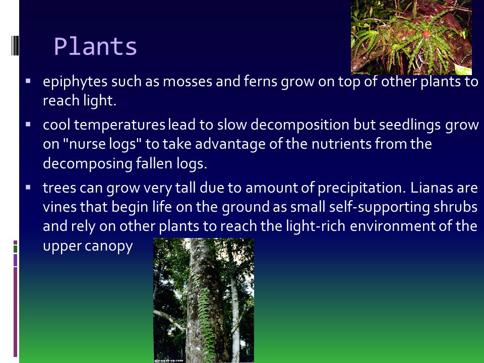 Plants  epiphytes such as mosses and ferns grow on top of other plants to reach light.  cool temperatures lead to slow decomposition but seedlings g