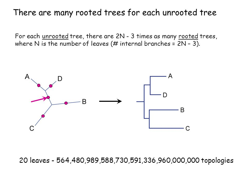 How can you compute a tree.