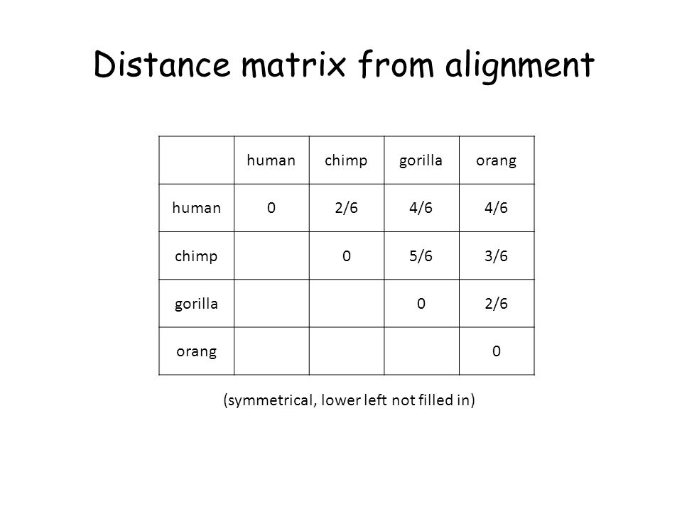 humanchimpgorillaorang human02/64/6 chimp05/63/6 gorilla02/6 orang0 Distance matrix from alignment (symmetrical, lower left not filled in)