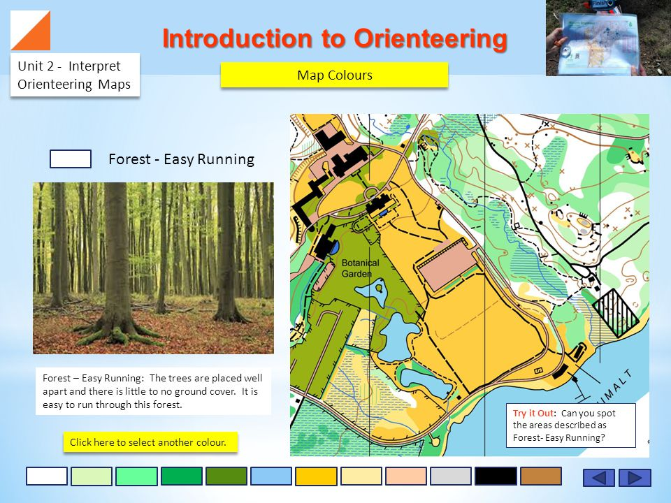 Introduction to Orienteering Unit 2 - Interpret Orienteering Maps Forest – Easy Running: The trees are placed well apart and there is little to no ground cover.